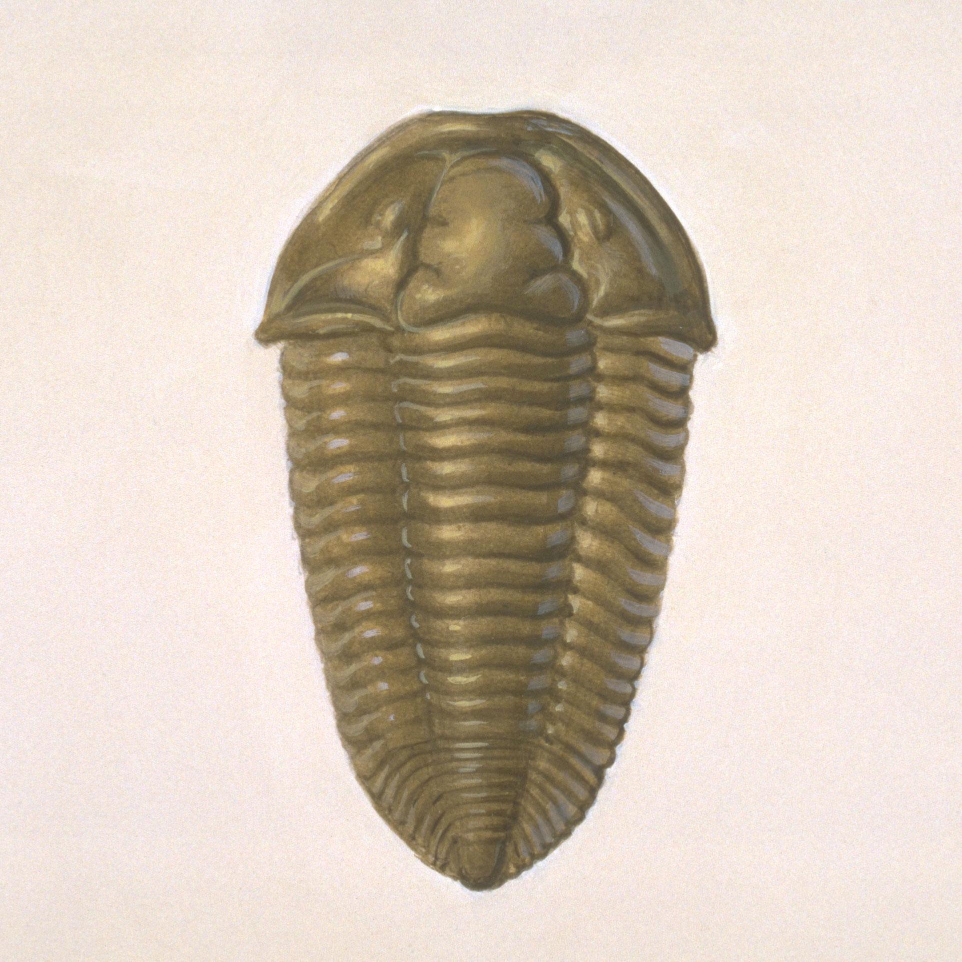 trilobite.jpg